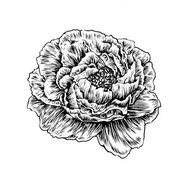 Annata floreale disegnata a mano realistica