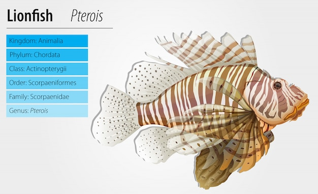 Antenne pterois