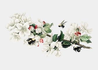 Apple blossom illustrazione su una carta di Natale