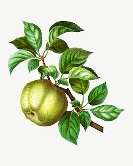 Apple su un ramo