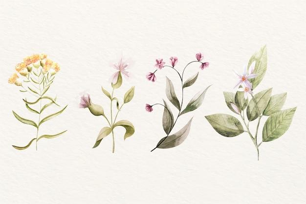 Assortimento di fiori botanica vintage