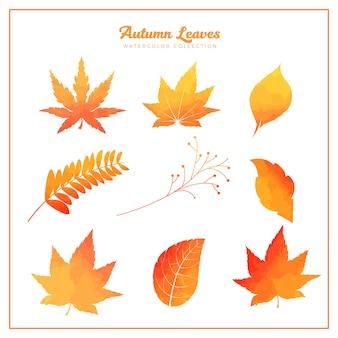 Autumn watercolor leaves