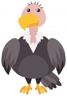 Avvoltoio su sfondo bianco