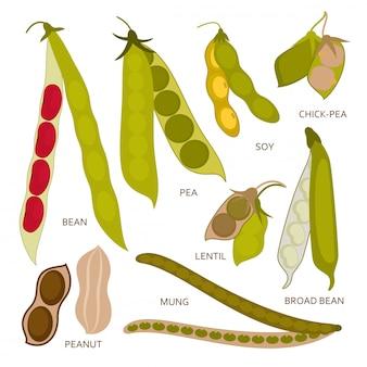 Baccelli di legumi impostati in stile piatto. illustrazione.