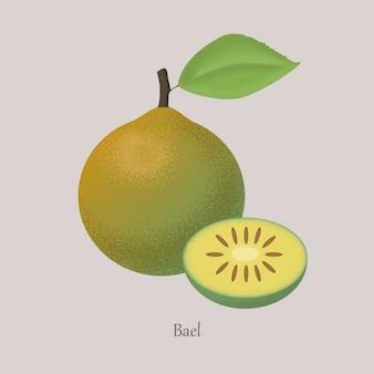 Bael, aegle marmelos, mela cotogna del bengala frutto esotico intero e tagliato.