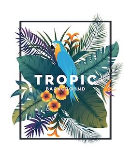 Bakground tropicale con cornice