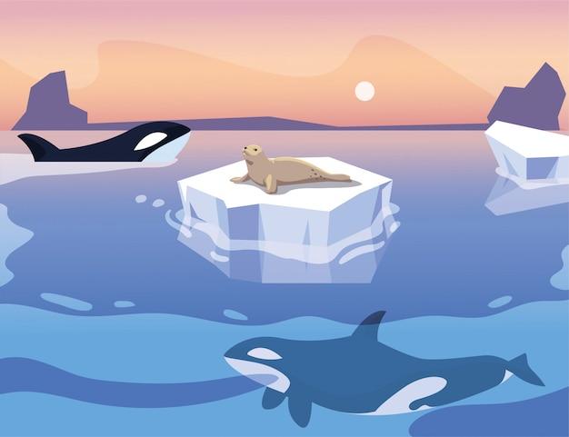 Balena di assassino con un iceberg che galleggia nel mare