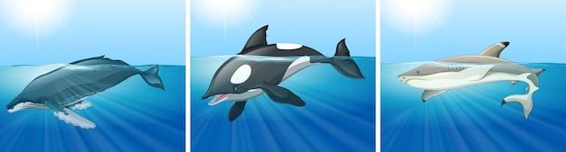 Balena e squalo nell'oceano