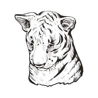 Bambino della tigre, ritratto di schizzo isolato animale esotico. illustrazione disegnata a mano.