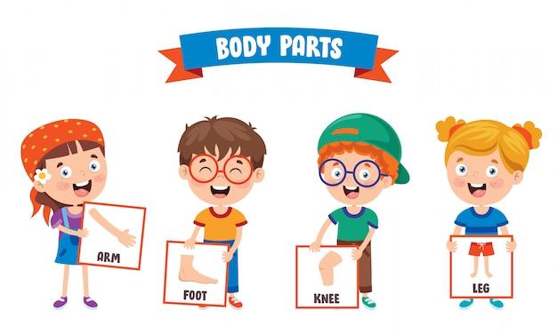 Bambino divertente che mostra le parti del corpo umano