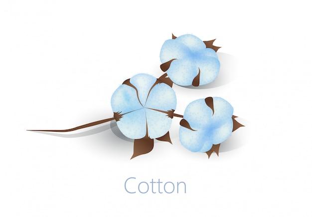 Bandiera dell'annuncio con i fiori del cotone isolati su bianco