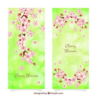 Banner bokeh verdi con fiori di ciliegio