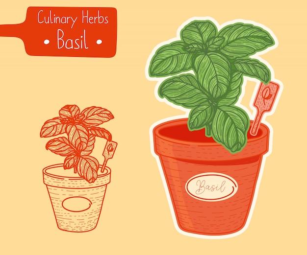 Basilico cresce in una pentola