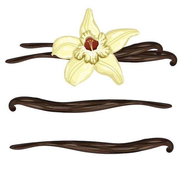 Bastoncini di vaniglia con un fiore su bianco