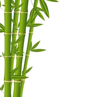 Bastoni di bambù sopra illustrazione vettoriale sfondo bianco