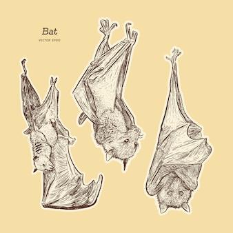 Bat illustrazione vettoriale.