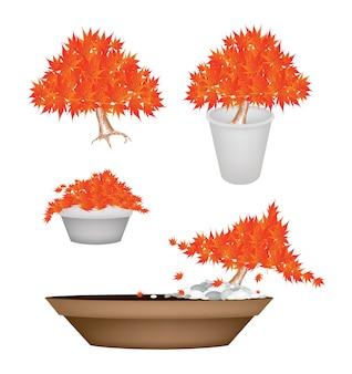 Bei alberi di acero arancioni in vasi da fiori