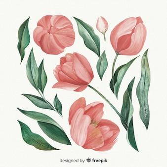 Bei fiori e foglie dell'acquerello