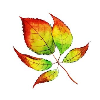 Bella acquerello autumn leaf