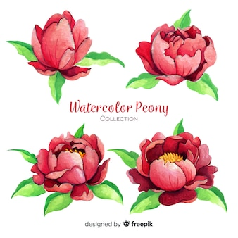 Bella collezione di fiori di peonia