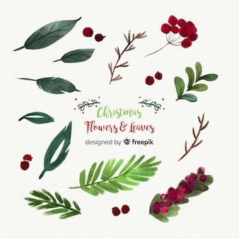 Bella collezione di fiori e foglie di natale dell'acquerello