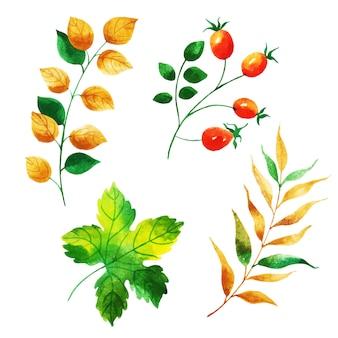 Bella collezione di foglie d'autunno dell'acquerello