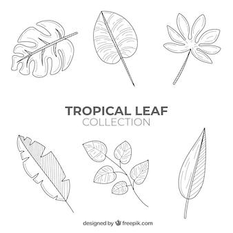 Bella collezione di foglie tropicali disegnata a mano