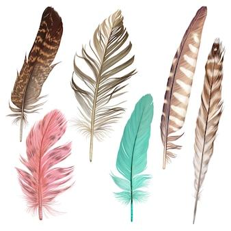 Bella collezione di piume colorate