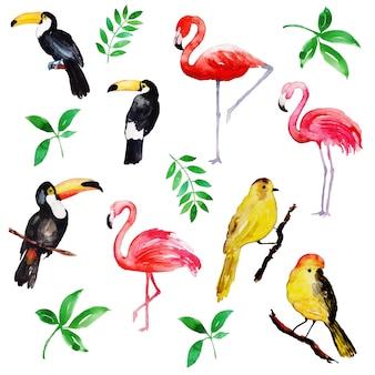 Bella collezione di uccelli tropicali dell'acquerello