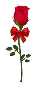 Bella rosa rossa con l'arco del nastro isolato