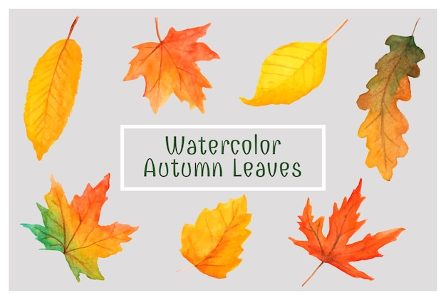 Belle foglie autunnali rosse e gialle