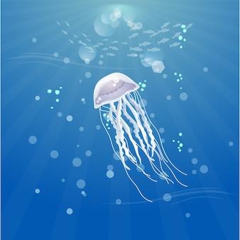 Belle meduse nell'oceano