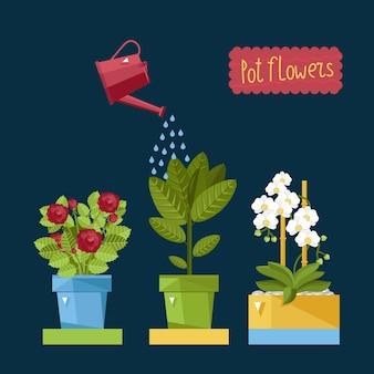 Belle piante di casa che vengono annaffiate