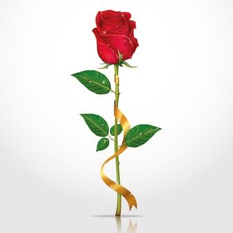 Bellezza rosa rossa con nastri.