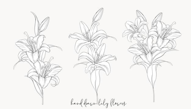Bellissimi mazzi di fiori di giglio disegnati a mano