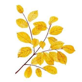 Bellissimo acquerello autumn leaf element