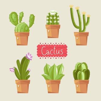 Bellissimo pacchetto di cactus di casa.