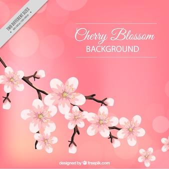 Bellissimo sfondo di fiori di ciliegio e effetto bokeh