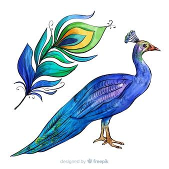 Bello acquerello pavone