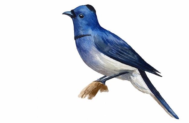 Bello uccello blu dipinto acquerello su fondo bianco