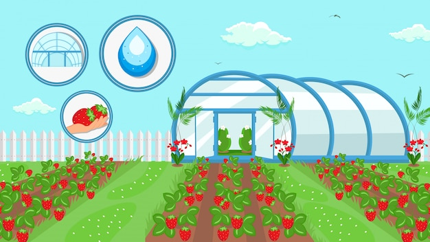 Berry cultivation farming technology illustration