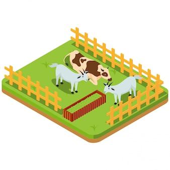 Bestiame tra cui capre nel paddock