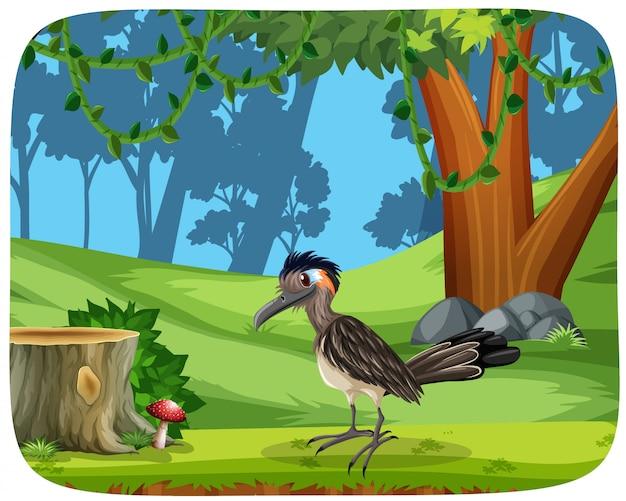 Bird in nature woods scene