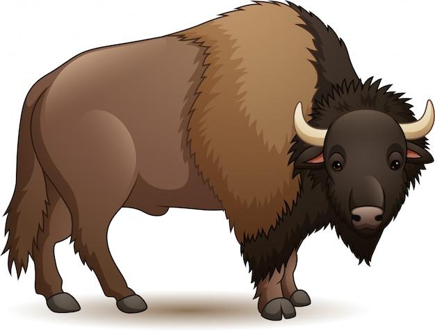 Bisonte isolato su sfondo bianco