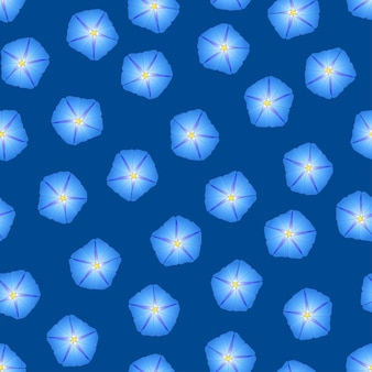 Blue morning glory flower su sfondo blu indaco