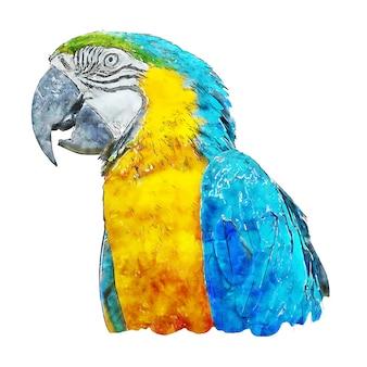 Blue parrot acquerello schizzo disegnato a mano illustrazione isolato su fondo bianco