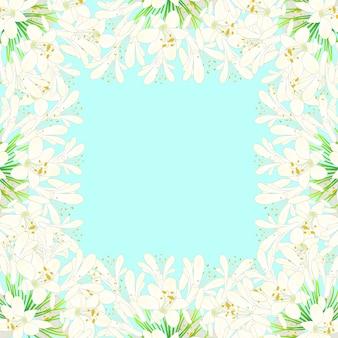 Bordo di agapanthus bianco come la neve