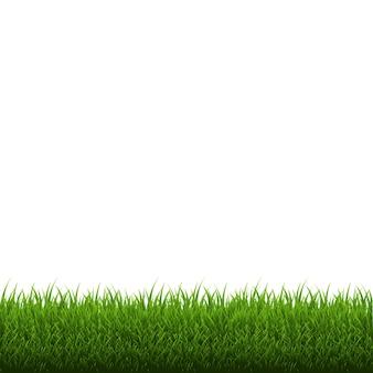 Bordo di erba isolato, illustrazione