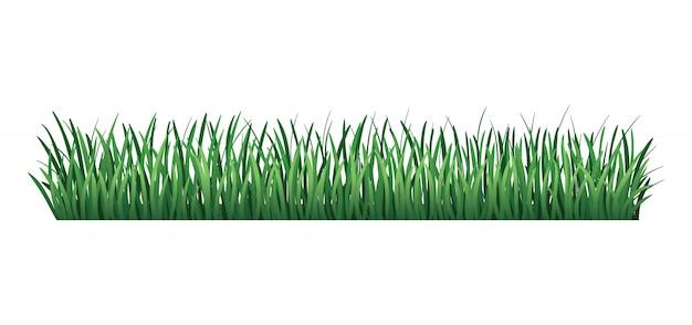 Bordo verde erba. erba verde fresca. isolato. illustrazione vettoriale da utilizzare come elemento di design