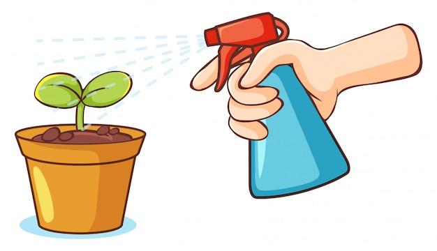 Bottiglia dello spruzzo e della pianta su fondo bianco